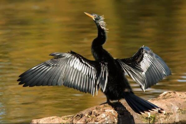 scary birds anhinga