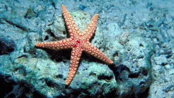 starfish in deep sea