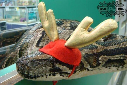 cute snakes with deer hats