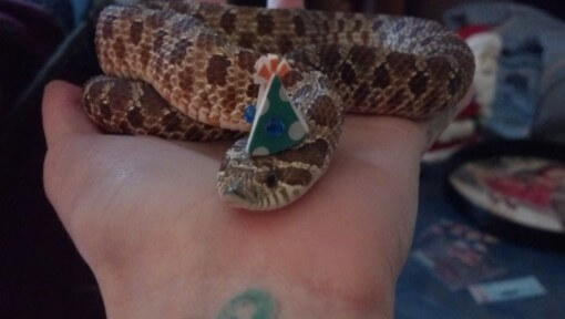 snake with birthday hats