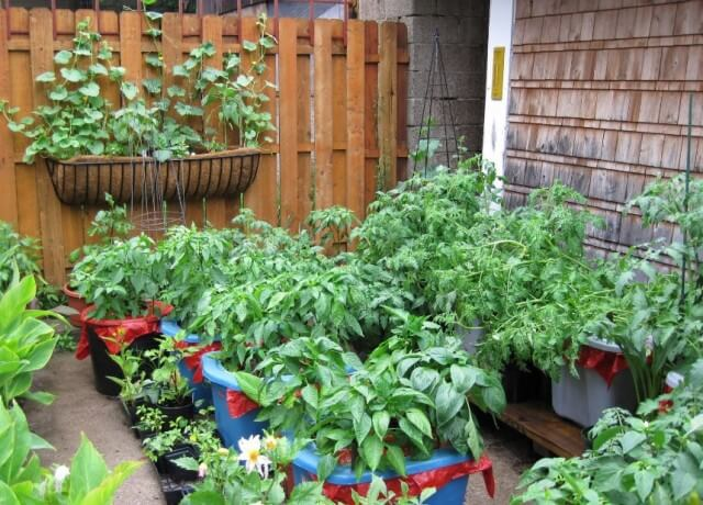 in container vegetable garden